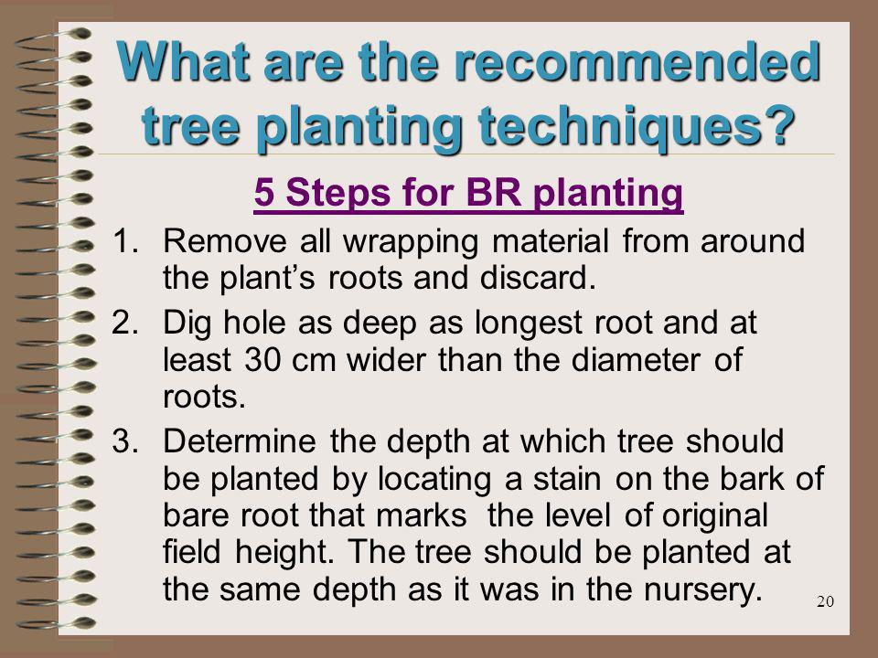 20 What are the recommended tree planting techniques? 5 Steps for BR planting 1.Remove all wrapping material from around the plants roots and discard.