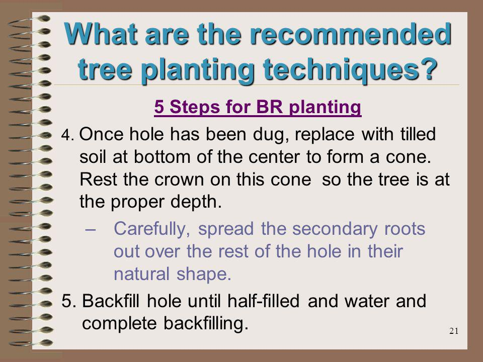 21 What are the recommended tree planting techniques.