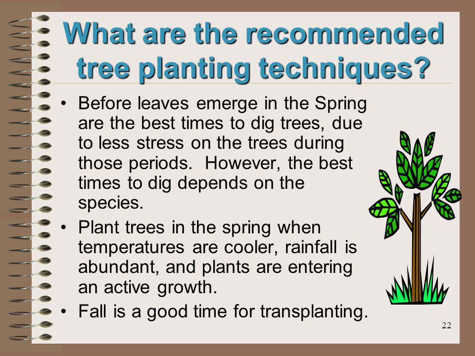 22 What are the recommended tree planting techniques? Before leaves emerge in the Spring are the best times to dig trees, due to less stress on the tr