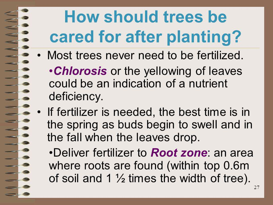 27 How should trees be cared for after planting? Most trees never need to be fertilized. Chlorosis or the yellowing of leaves could be an indication o