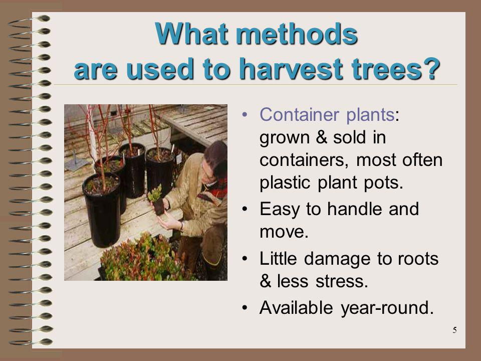 5 What methods are used to harvest trees? Container plants: grown & sold in containers, most often plastic plant pots. Easy to handle and move. Little