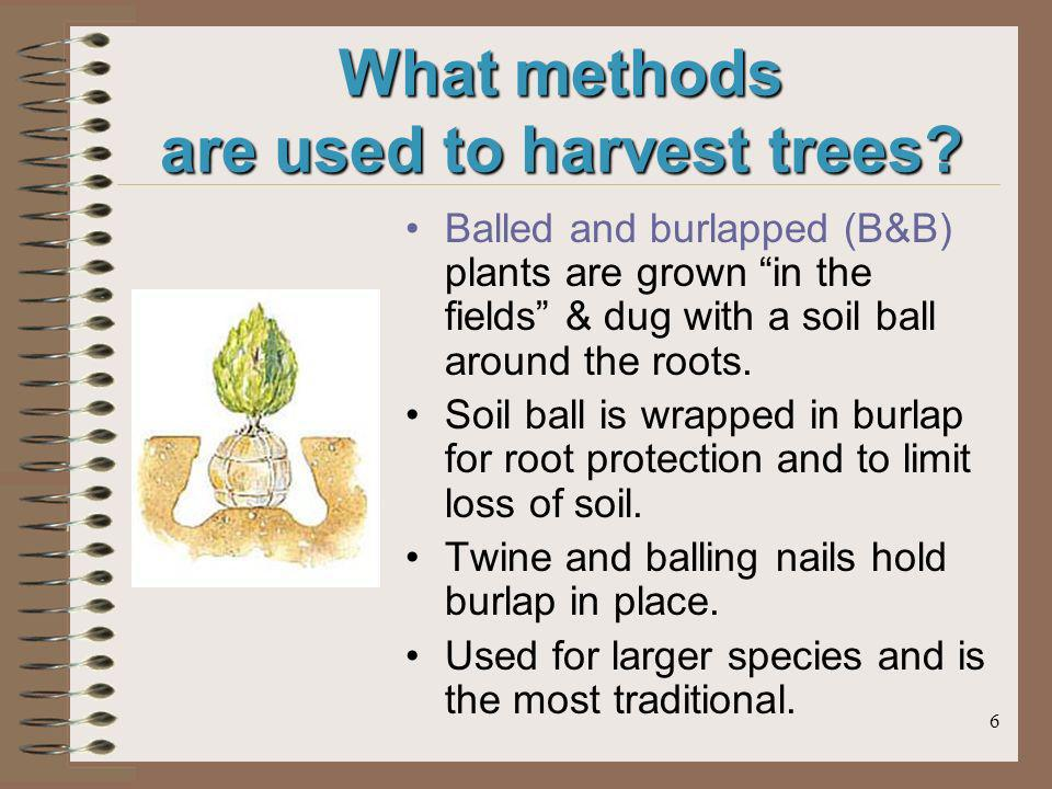 6 What methods are used to harvest trees? Balled and burlapped (B&B) plants are grown in the fields & dug with a soil ball around the roots. Soil ball