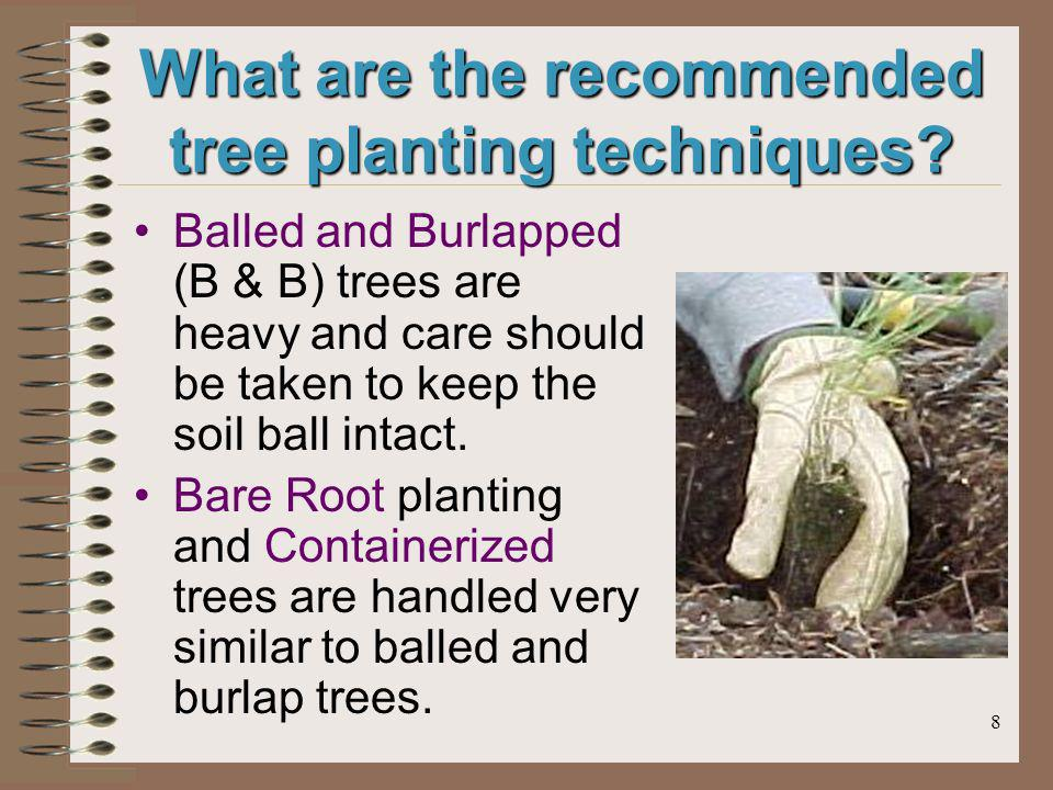 8 What are the recommended tree planting techniques.
