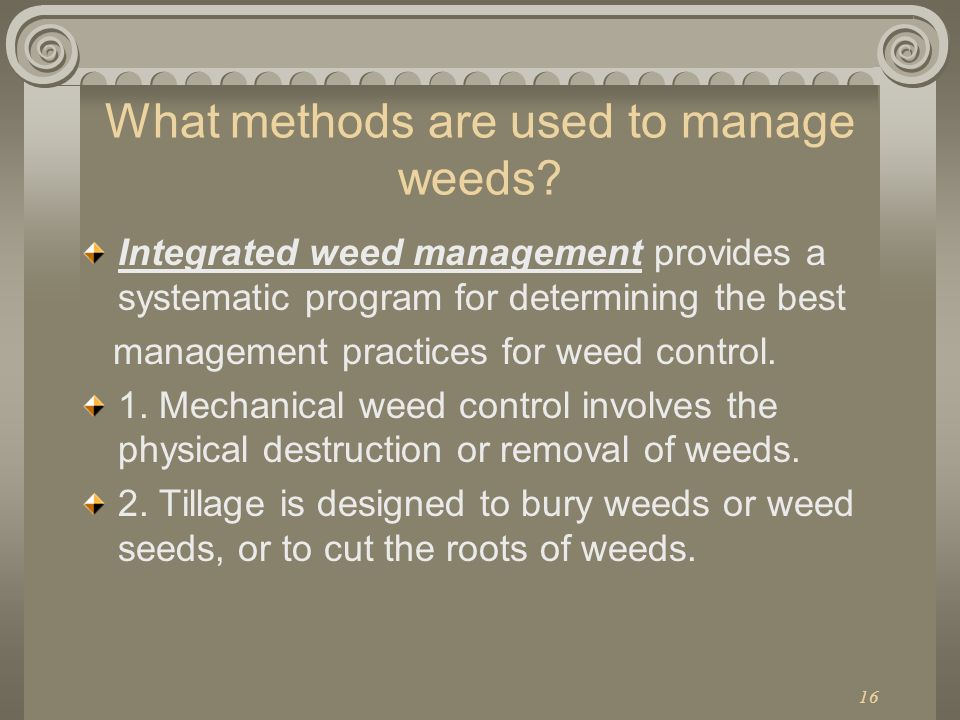 16 What methods are used to manage weeds? Integrated weed management provides a systematic program for determining the best management practices for w