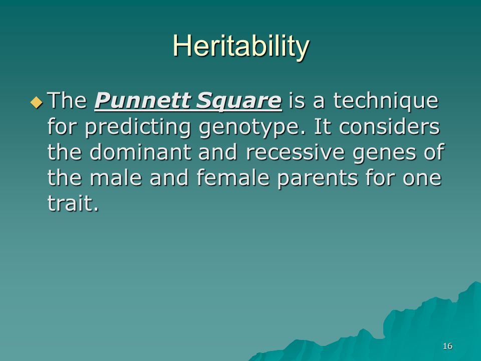 16 The Punnett Square is a technique for predicting genotype. It considers the dominant and recessive genes of the male and female parents for one tra