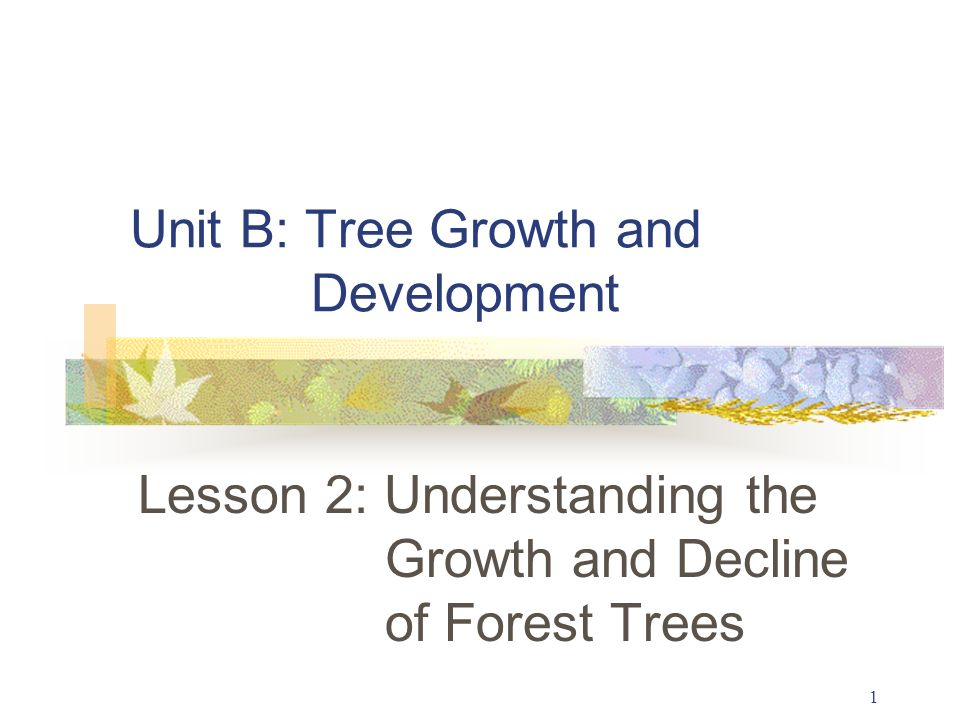 1 Unit B: Tree Growth and Development Lesson 2: Understanding the Growth and Decline of Forest Trees