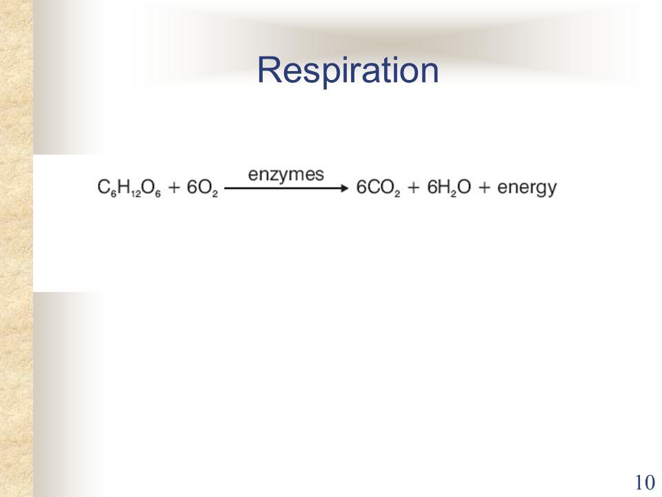 10 Respiration