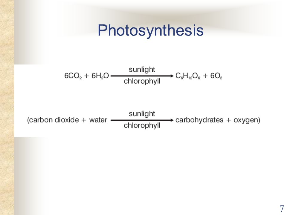 7 Photosynthesis