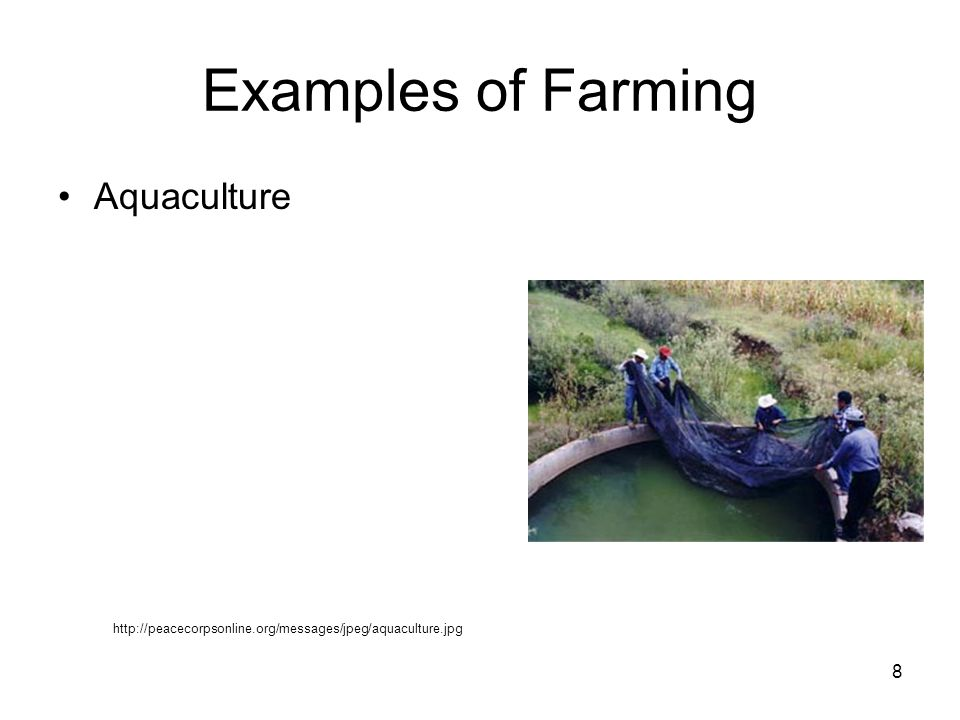 Examples of Farming Aquaculture http://peacecorpsonline.org/messages/jpeg/aquaculture.jpg 8