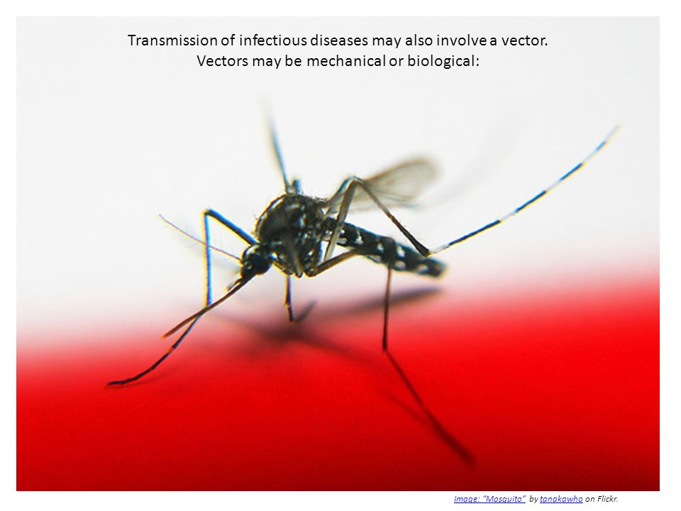 Transmission of infectious diseases may also involve a vector. Vectors may be mechanical or biological: Image: MosquitoImage: Mosquito by tanakawho on