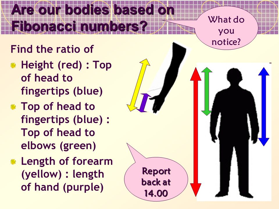 Are our bodies based on Fibonacci numbers? Find the ratio of Height (red) : Top of head to fingertips (blue) Top of head to fingertips (blue) : Top of