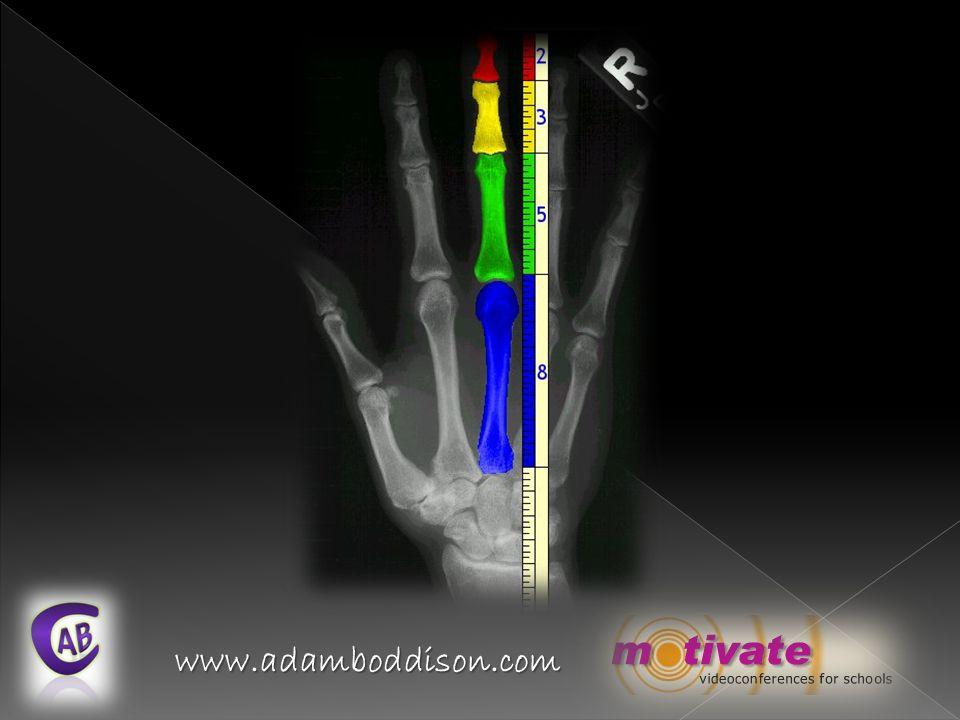 www.adamboddison.com