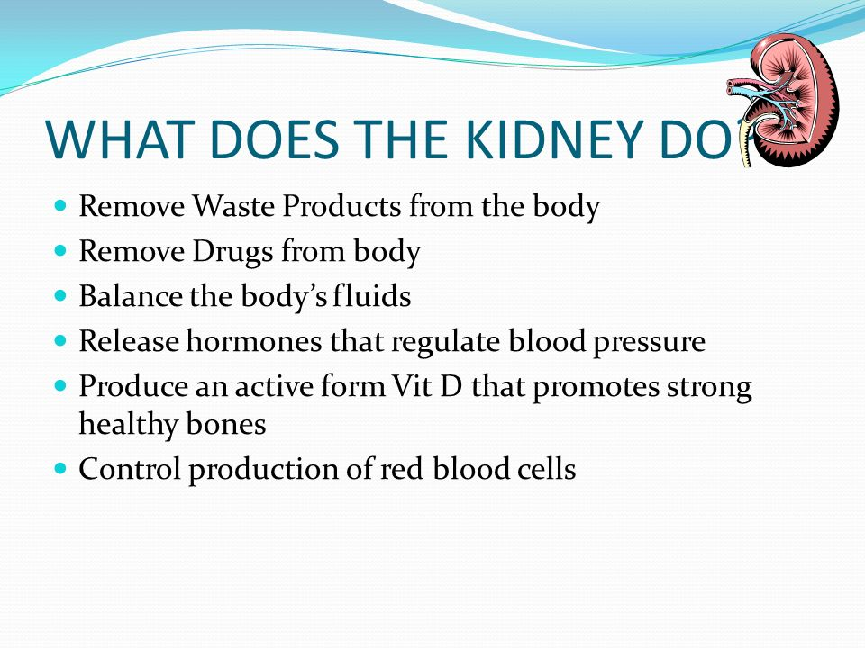 WHAT DOES THE KIDNEY DO? Remove Waste Products from the body Remove Drugs from body Balance the bodys fluids Release hormones that regulate blood pres