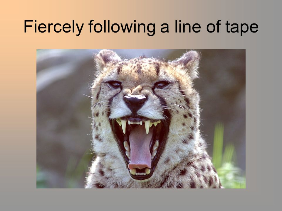 Fiercely following a line of tape