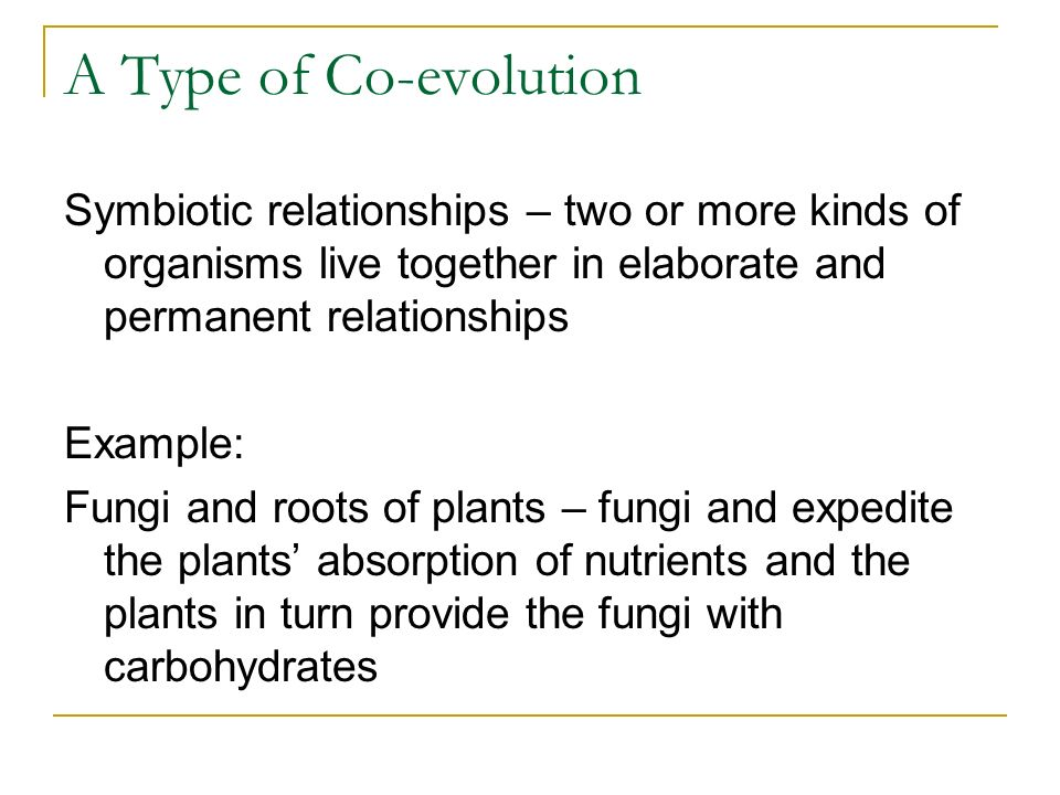 A Type of Co-evolution Symbiotic relationships – two or more kinds of organisms live together in elaborate and permanent relationships Example: Fungi