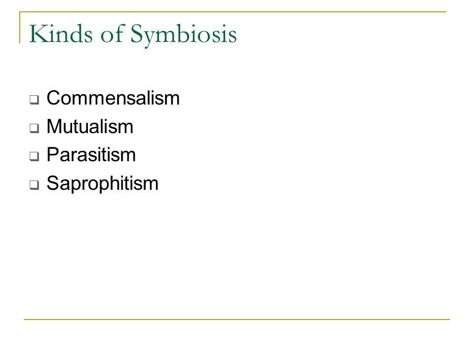 Kinds of Symbiosis Commensalism Mutualism Parasitism Saprophitism