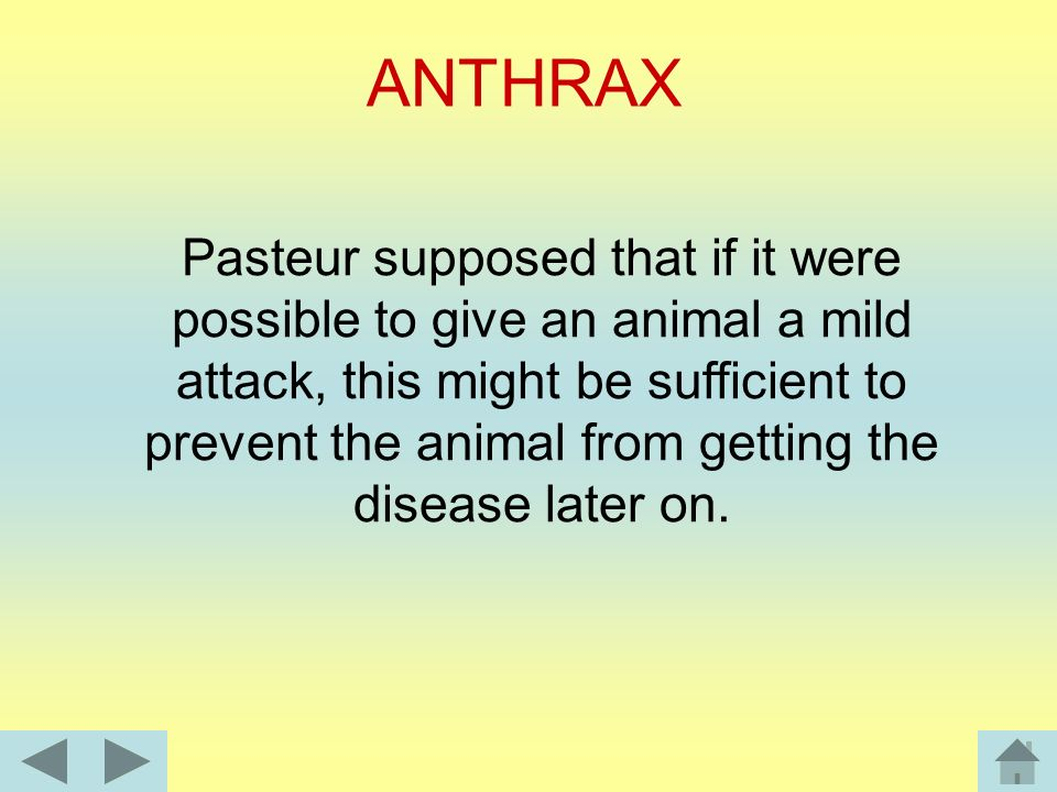 To Pasteur's amazement neither of the cows developed the disease. Later, he found that both animals had already suffered from anthrax. Pasteur asked h