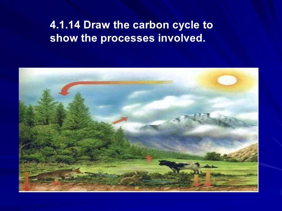 4.1.14 Draw the carbon cycle to show the processes involved.