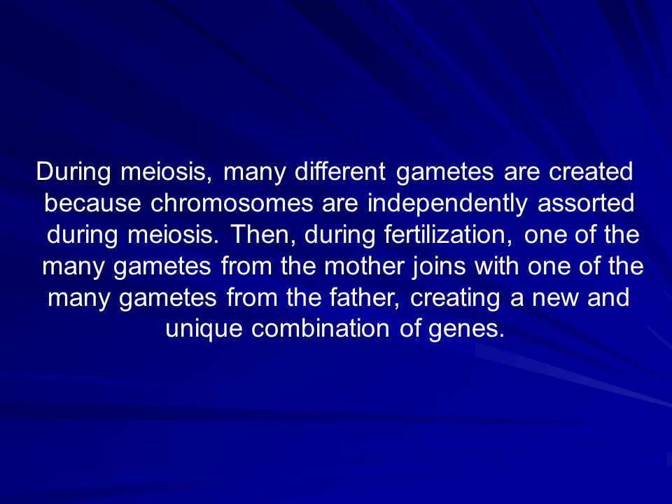 During meiosis, many different gametes are created because chromosomes are independently assorted during meiosis. Then, during fertilization, one of t