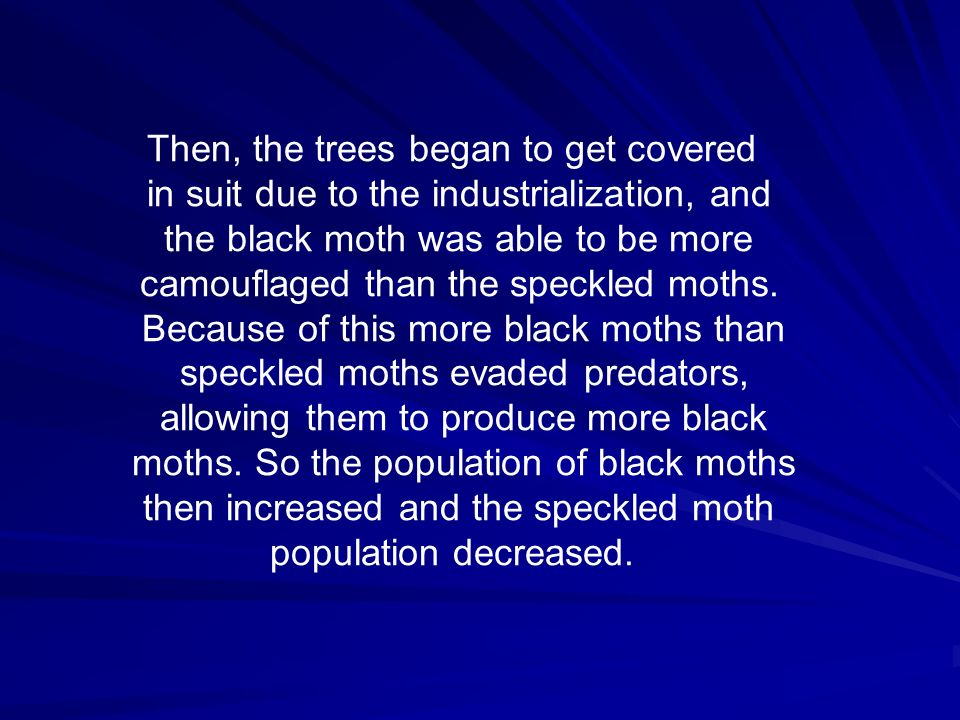 Then, the trees began to get covered in suit due to the industrialization, and the black moth was able to be more camouflaged than the speckled moths.