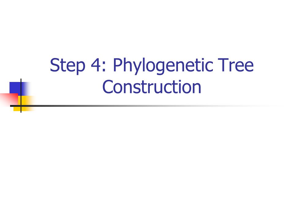 Step 4: Phylogenetic Tree Construction