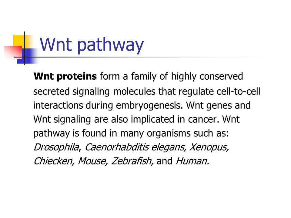 Wnt pathway Wnt proteins form a family of highly conserved secreted signaling molecules that regulate cell-to-cell interactions during embryogenesis.