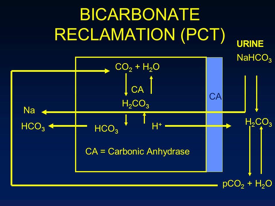 BICARBONATE RECLAMATION (PCT) NaHCO 3 URINE H 2 CO 3 pCO 2 + H 2 O CO 2 + H 2 O CA H 2 CO 3 HCO 3 H+H+ CA = Carbonic Anhydrase CA Na HCO 3