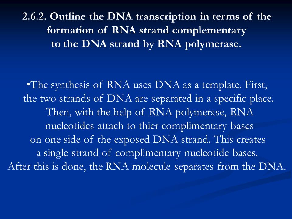 2.6.2. Outline the DNA transcription in terms of the formation of RNA strand complementary to the DNA strand by RNA polymerase. The synthesis of RNA u