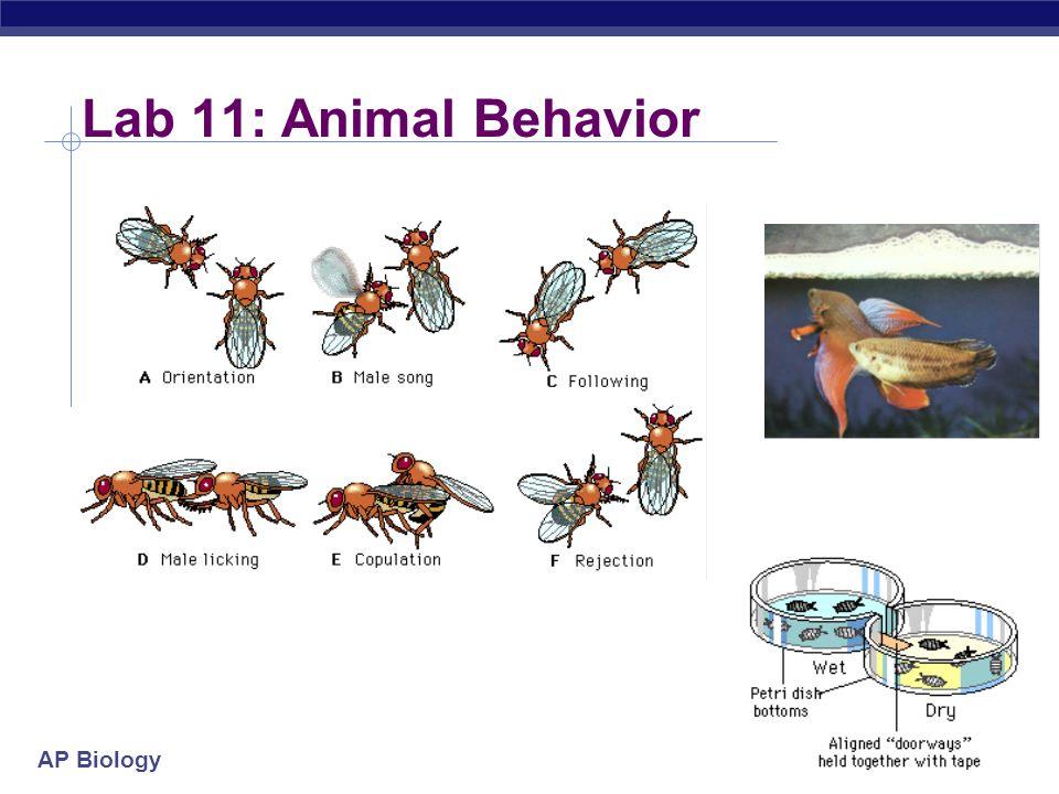 AP Biology 2004-2005 Lab 11: Animal Behavior