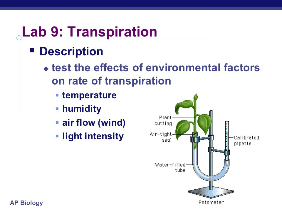 AP Biology 2004-2005 Lab 9: Transpiration Description test the effects of environmental factors on rate of transpiration temperature humidity air flow