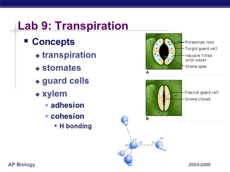 AP Biology 2004-2005 Lab 9: Transpiration Concepts transpiration stomates guard cells xylem adhesion cohesion H bonding