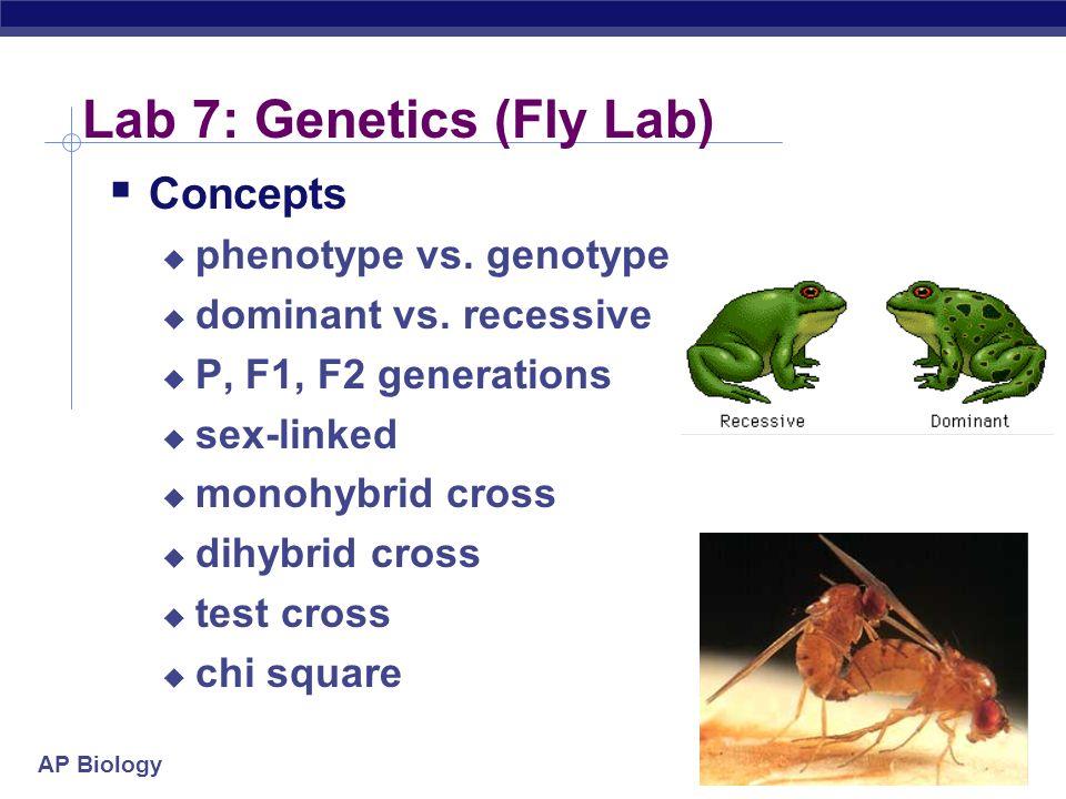 AP Biology 2004-2005 Lab 7: Genetics (Fly Lab) Concepts phenotype vs. genotype dominant vs. recessive P, F1, F2 generations sex-linked monohybrid cros