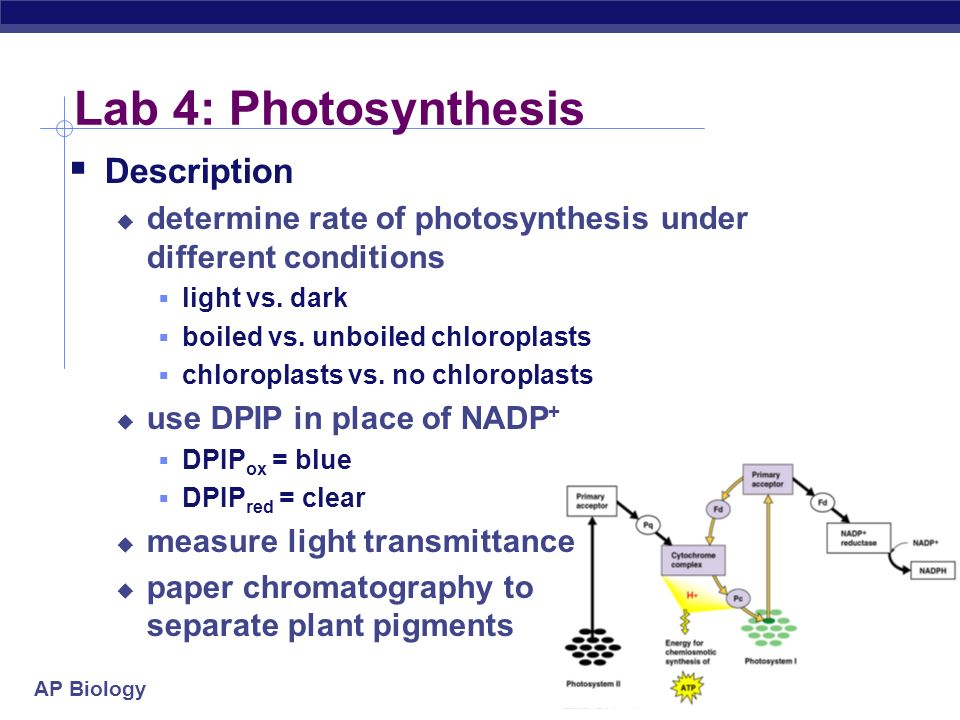 Photosynthesis Essay Conclusion Turnitins Formative Feedback And Originality Checking Services Promote  Critical Thinking Ensure Photosynthesis Essay Conclusion Wizkids  Dedicated To