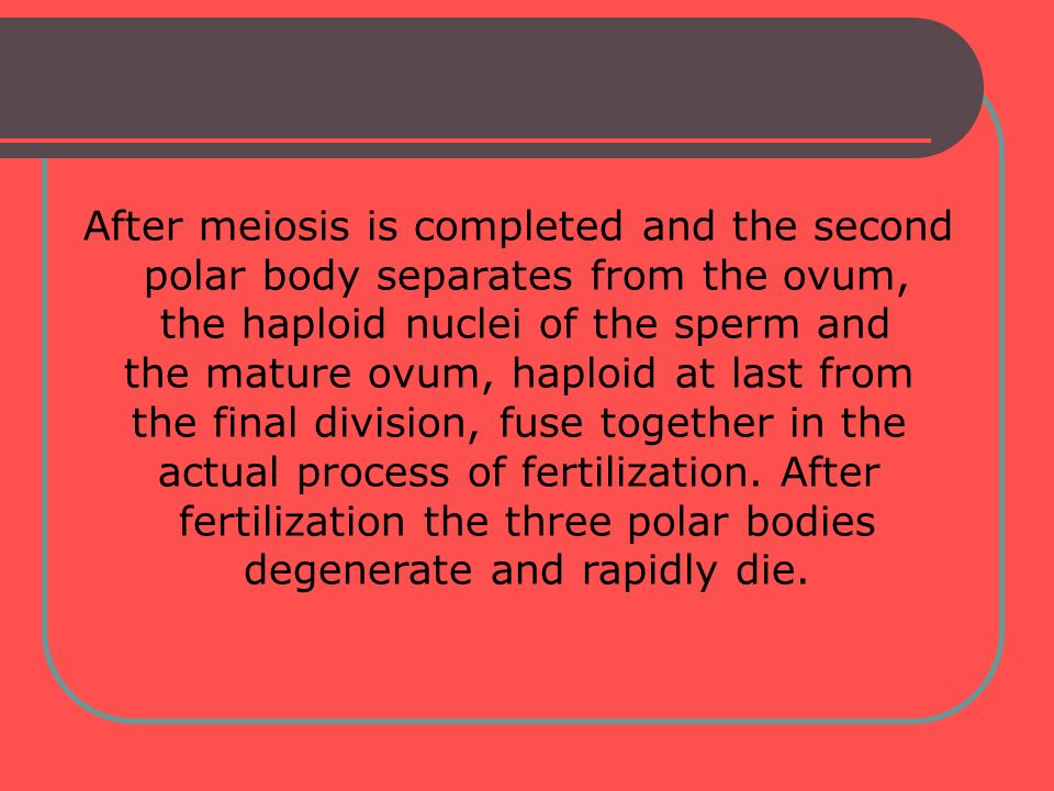 After meiosis is completed and the second polar body separates from the ovum, the haploid nuclei of the sperm and the mature ovum, haploid at last fro