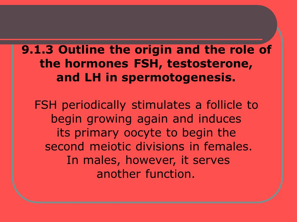 The increased release of FSH combined with LH from the anterior pituitary glands in the head induces the increased production of testosterone, which in turn increases the rate of spermatogenesis.