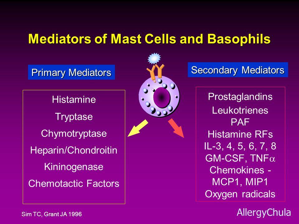 Mediators of Mast Cells and Allergy Mast Cell Basophil Blood Vessels Smooth Muscles Mucus Glands Sensory Nerves LeukocytesLeukocytes H, PGD 2, LTs, PAF bradykinin H H, PGD 2, LTs, PAF LTB4PAF IL3, IL5 Chemokines Urticaria, Angioedema Laryngeal edema, Shock Bronchospasm Abd.
