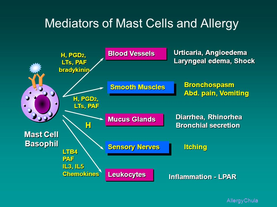 Mediators of Mast Cells and Allergy Mast Cell Basophil Blood Vessels Smooth Muscles Mucus Glands Sensory Nerves LeukocytesLeukocytes H, PGD 2, LTs, PA