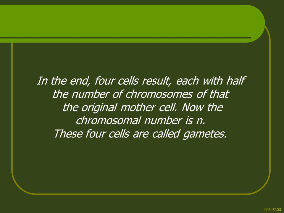 In the end, four cells result, each with half the number of chromosomes of that the original mother cell. Now the chromosomal number is n. These four
