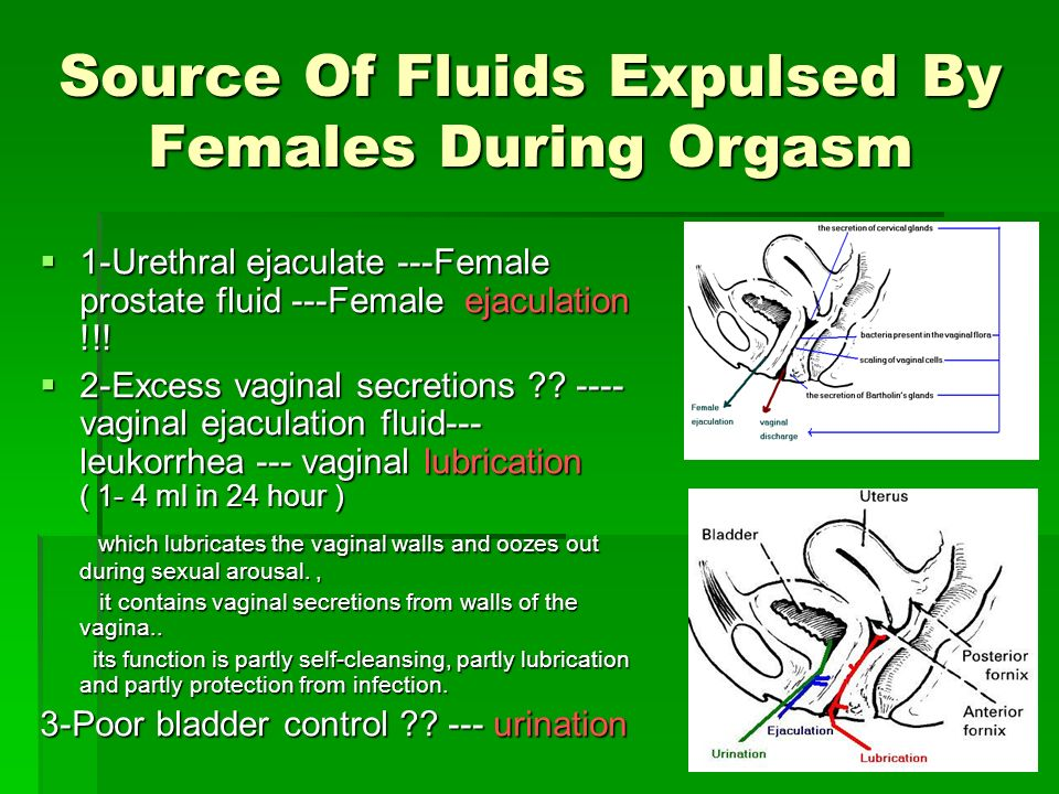 Ejaculate Fluid Comes From Ejaculate Fluid Comes From From the urethra From the urethra Not from the bladder except in a very small number of women complaining from urinary incontinence Not from the bladder except in a very small number of women complaining from urinary incontinence Not from the vagina Not from the vagina
