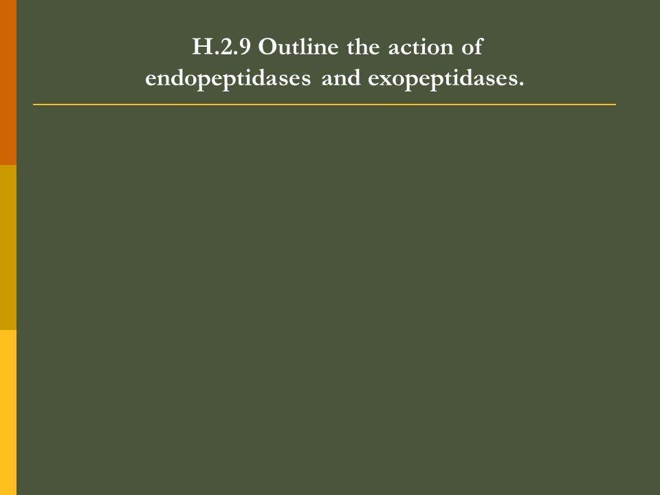 H.2.9 Outline the action of endopeptidases and exopeptidases.