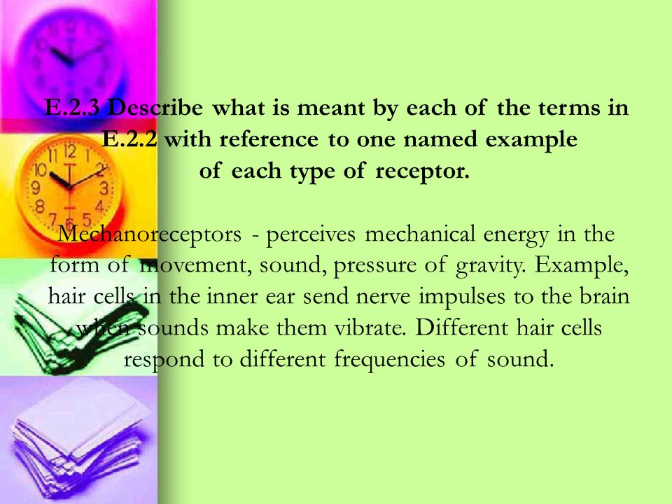 E.2.3 Describe what is meant by each of the terms in E.2.2 with reference to one named example of each type of receptor. Mechanoreceptors - perceives