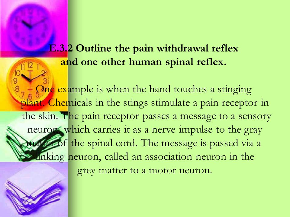 E.3.2 Outline the pain withdrawal reflex and one other human spinal reflex. One example is when the hand touches a stinging plant. Chemicals in the st