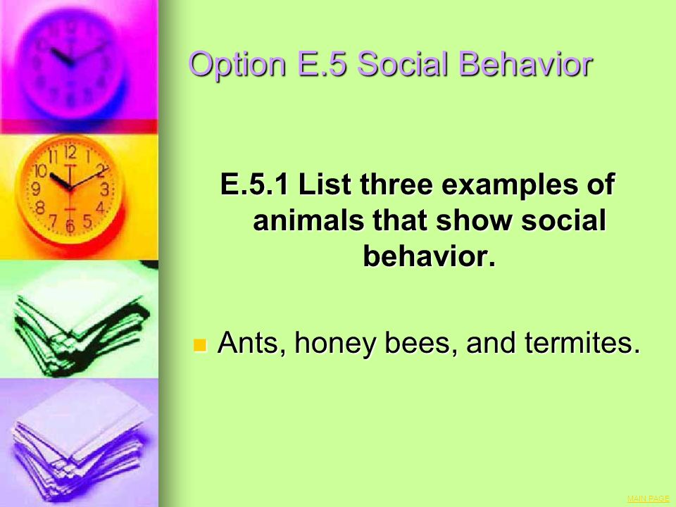 Option E.5 Social Behavior E.5.1 List three examples of animals that show social behavior. Ants, honey bees, and termites. Ants, honey bees, and termi