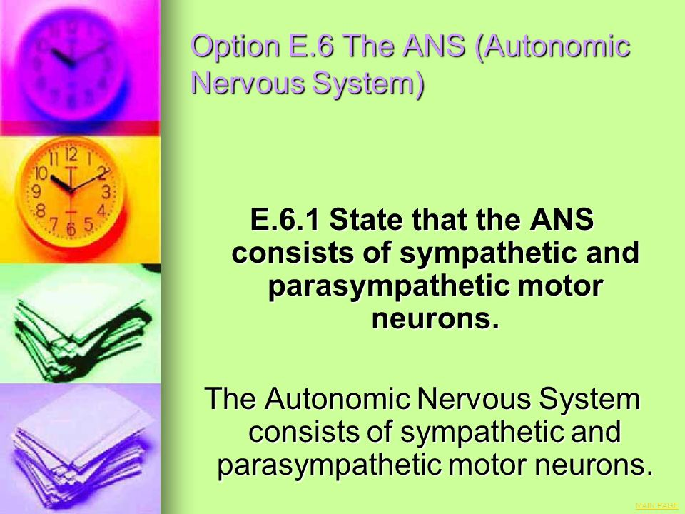 Option E.6 The ANS (Autonomic Nervous System) E.6.1 State that the ANS consists of sympathetic and parasympathetic motor neurons. The Autonomic Nervou