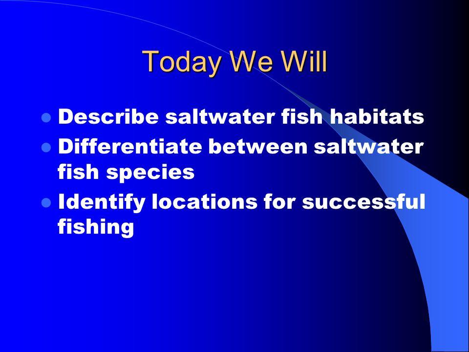 Saltwater Fish Species Identification Mr. Robinson