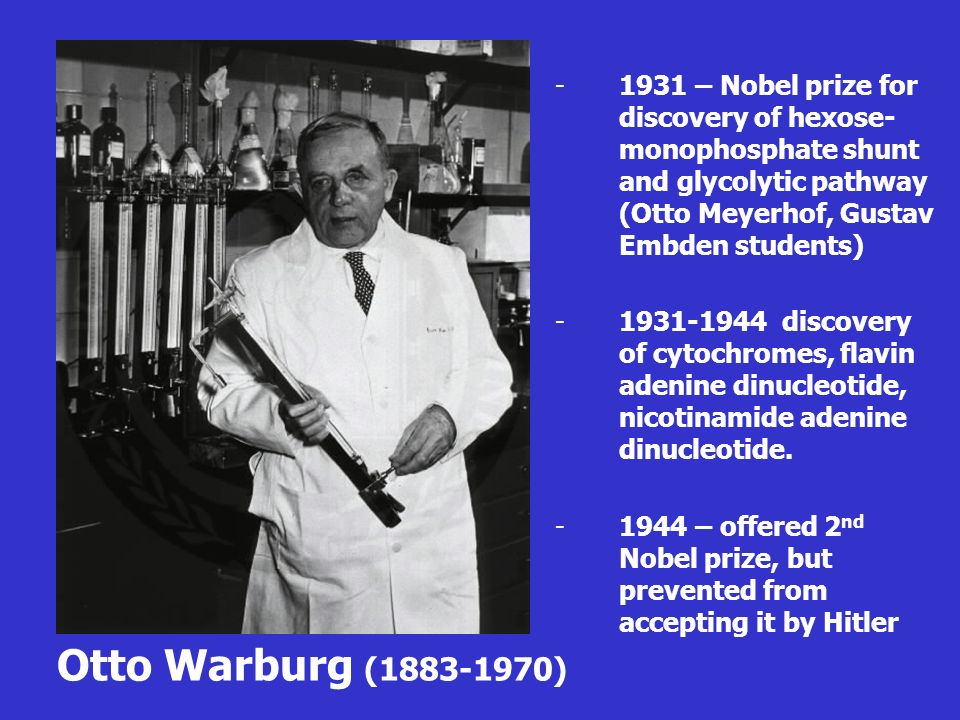 Otto Warburg (1883-1970) -1931 – Nobel prize for discovery of hexose- monophosphate shunt and glycolytic pathway (Otto Meyerhof, Gustav Embden student