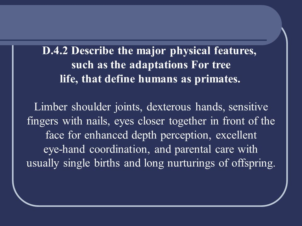 D.4.2 Describe the major physical features, such as the adaptations For tree life, that define humans as primates. Limber shoulder joints, dexterous h