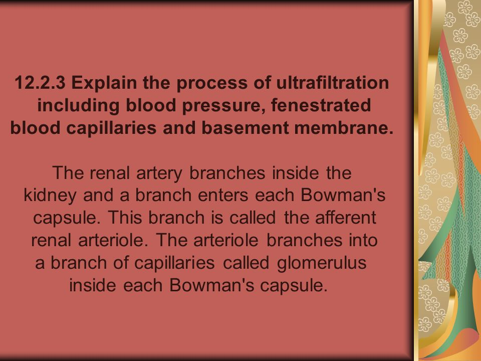 12.2.3 Explain the process of ultrafiltration including blood pressure, fenestrated blood capillaries and basement membrane. The renal artery branches