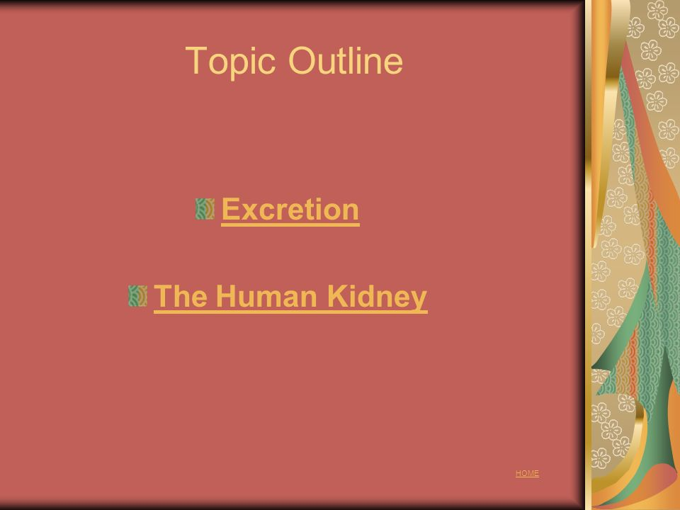 Topic 12.1 Excretion 12.1.1 Outline the need for excretion in all living organisms.