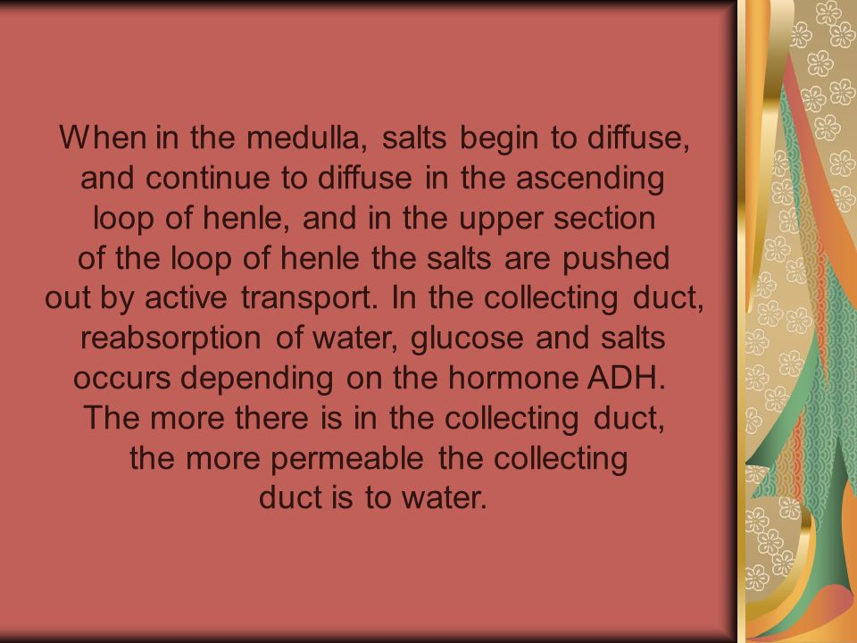 When in the medulla, salts begin to diffuse, and continue to diffuse in the ascending loop of henle, and in the upper section of the loop of henle the
